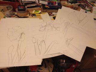 Amaryllis winter studies